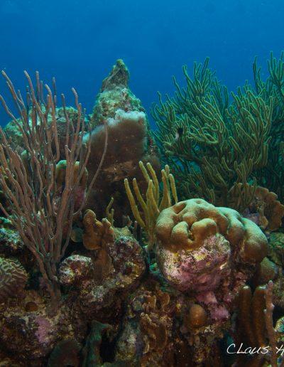 051216_Atlantis_Coral_Reef
