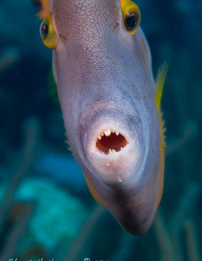 051216_Atlantis_Filefish